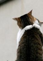 cat, couple, embrace