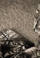 cat, dream, magazine