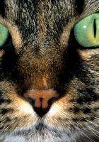 cat, eyes, evil