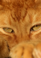 cat face, tired, feet