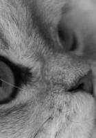 cat, face, wool