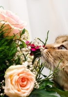 cat, flower, flowers