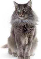 cat, fluffy, cats