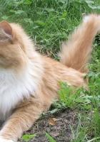 cat, furry, grass