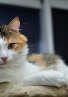 cat, furry, look
