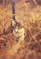 cat, grass, nature
