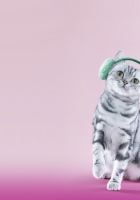 cat, headphones, lilac