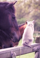 cat, horse, stables