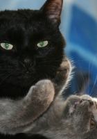 cat, kitten, couple