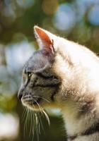 cat, light, glare