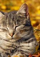 cat, muzzle, sleeping