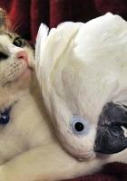 cat, parrot, friends