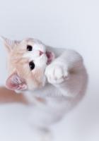 cat, playful, jump