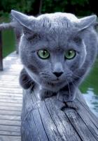 cat, river, rail
