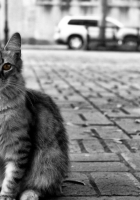 cat, road, city