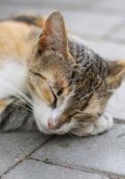 cat, sleep, paws