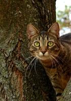 cat, tree, striped