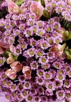 chrysanthemums, alstroemeria, flowers
