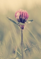 clover, grass, glare
