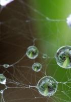 cobweb, drops, green