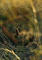 cobweb, green, form
