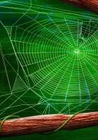 cobwebs, leaves, wood