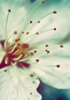 color, stamens, petals