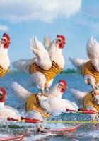 competition, chicken, sea