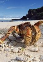 crab, beach, sand