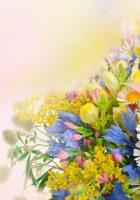 daisies, cornflowers, carnations