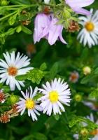daisies, flowers, bells