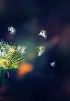 dandelion, flower, flying