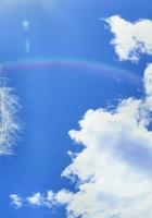 dandelion, sky, clouds