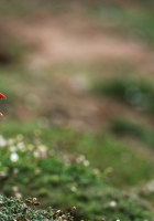 deadlock, birds, grass