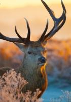 deer, branches, sunlight