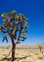 desert, tree, vegetation