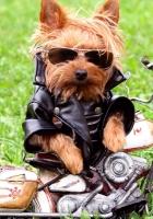 dog, biker, jackets