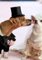 dog, couple, wedding