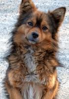 dog, face, cute
