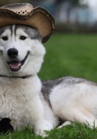 dog, furry, hat
