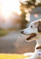 dog, muzzle, sunlight