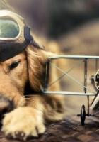 dog, pilot, plane