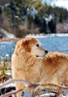 dog, river, walk