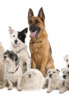dogs, variety, set