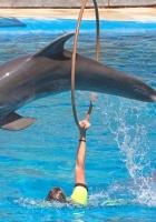dolphin, pool, jump