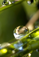 drops, grass, large