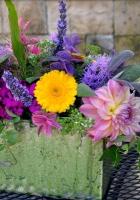 echinacea, dahlia, flower