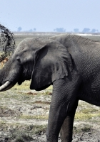 elephant, dirt, splash