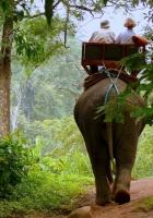 elephant, driver, jungle