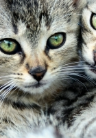 eyes, two, cats